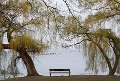 Bänk på sjön Royaltyfria Foton