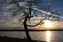 Bänk på solnedgången Arkivfoto