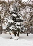Bänk under ett träd i vintern Royaltyfria Bilder