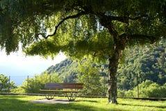 Bänk under träd Fotografering för Bildbyråer