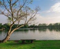 Bänk under trädet bredvid sjön Royaltyfri Fotografi