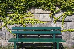 Bänk under väggen som är bevuxen med murgrönan royaltyfri fotografi