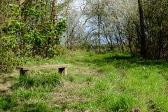 Bänk vid en skogsmarkbana Royaltyfria Bilder