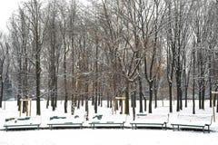 Bänkar i parken Royaltyfri Foto