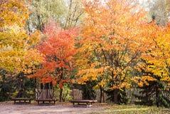 Bänkar under höstträden i en parkera fotografering för bildbyråer