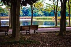 Bänkarna under träden i en parkera Royaltyfri Foto