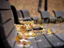 Bänke abgedeckt mit gefallenen Blättern stockbild