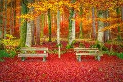 Bänke auf einem Teppich des Herbstlaubs Stockbild