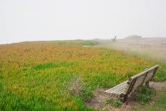 Bänke auf Gras Stockfotografie