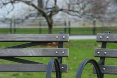 Bänke am Park Lizenzfreie Stockfotos