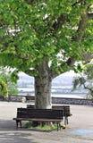 Bänke unter Baum Stockbild
