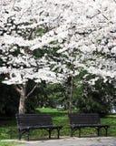 Bänke unter den Blüten Stockbilder