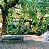Bänke vor den Bäumen Stockfoto