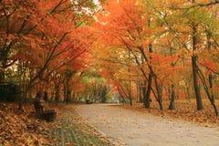 Bänken i Autumn Forest parkerar arkivbilder
