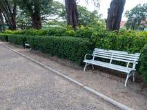 Bänken i den skuggiga trädgården royaltyfri foto