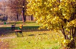 Bänken i höst parkerar med bladguld omkring Arkivfoton