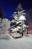 Bänken i natten parkerar under den fallande snön Royaltyfria Foton