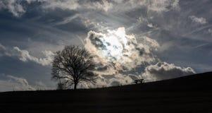 Bänken och det ensamma trädet är att söka efter som är ljust royaltyfri foto
