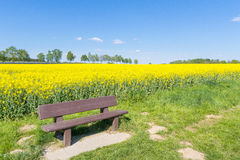 Bänken och det gula fältet Royaltyfria Foton