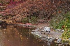 Bänken på litier parkerar vid sjön royaltyfri bild