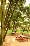 bänken table peacefully treen Arkivfoton