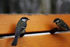 bänkfåglar Royaltyfri Bild