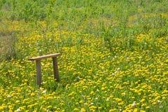bänkmaskrosor field trä Fotografering för Bildbyråer