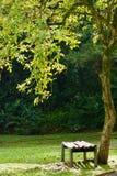 Bänkplats under ett härligt träd royaltyfria bilder