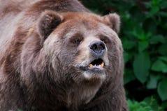 Bär lizenzfreies stockfoto