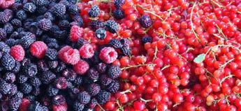 Bär av björnbär, hallon och vinbär royaltyfri bild
