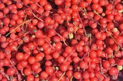 Bär av långt - den östliga växten Schisandra chinensis 23 Arkivbild