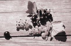 Bär av vinbären och krusbäret Royaltyfri Bild