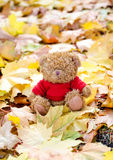 Bär in den Blättern Stockfoto