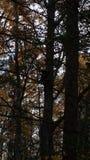 Bär, der in einem Baum sitzt lizenzfreies stockbild
