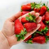 Bär för hand för kvinna` s hållande och nya mogna jordgubbar i plast- ask på blå bakgrund Royaltyfria Bilder