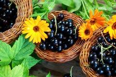 Bär för svart vinbär i en vide- korg fotografering för bildbyråer