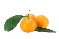 bär fruktt tangerinen Royaltyfria Bilder