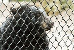 Bär hinter Gittern in einem Zoo Stockbild