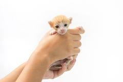 Bär kattungen 2 gamla veckor på vit bakgrund Royaltyfria Foton