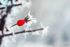 Bär med frost Arkivbild