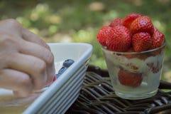 Bär och jordgubbe Arkivfoton