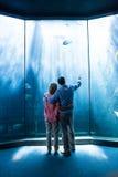 Bär sikten av par som ser fisken i behållaren Arkivbild