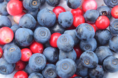 Bär tranbär, blåbär Fotografering för Bildbyråer