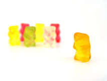 Bär und sein Team Stockbilder