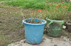 Bär vattenhinkar används ut för blomkrukor Återanvända gamla fack i blommaträdgård Royaltyfri Bild