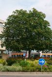 Bära frukt dekorativt träd på trafikön royaltyfria foton