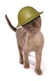 Bärande arméhjälm för kattunge Arkivfoton