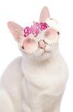 Bärande brud för Khao Manee katt som är exponeringsglas Arkivfoton