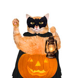 Bärande dräkt för katt för halloween med en pumpa Royaltyfria Bilder
