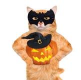 Bärande dräkt för katt för halloween med en pumpa Arkivfoto